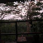 Mango Suite view at dusk