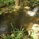The Glade Pond