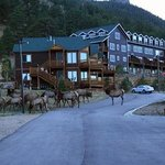 Elk outside the door of the condo we stayed in.