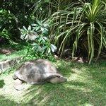 Une des tortues