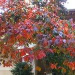 Райские яблочки-Хурма растет во внутреннем дворике монастыря