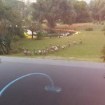 The geese coming to start the day. When we had just finished our New Years party..