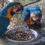Birds feeding on a platform