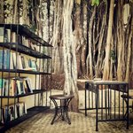 The library under the banyan tree.