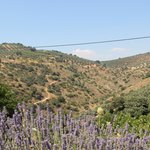 Valley with olive groves right near the house