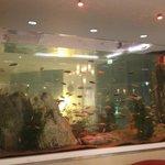Hotel fish tank!