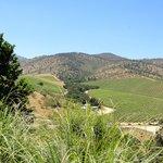Vineyards surrounding the winery.