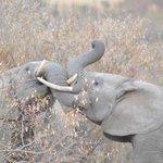 Wildlife aroudn the tent