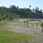 Plage très large. Les arbres font office de palapas pour de l'ombre.