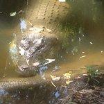 crocodile in the park