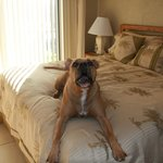 #305 pet friendly master bedroom