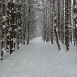 The Snowshoe trail