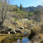 Canyon Trail Loop stream