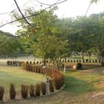 Nice garden grounds