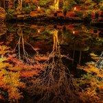 池に映り込む紅葉。まるで鏡のような綺麗な反射です。