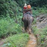 Excursion avec les éléphants Khao Sok