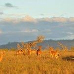 Out on Safari