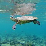 An encounter with a sea turtle