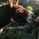 Cutest donkey ever