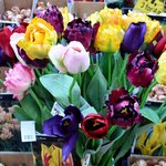 Sementes e flores