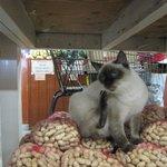 Store's cat