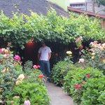 Hydrangias and Roses