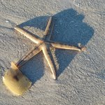 Starfish seen on the beach