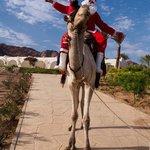 Santa arrived on a camel