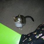 Little Belizean kitty wanted some lobster!