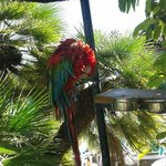 hotels friendly parrot says