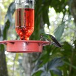Hummingbirds were always buzzing around BRL!