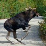 Moose bluff