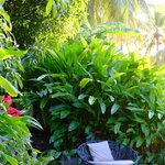 Private Niches abound, here is a small reading area in the secret garden