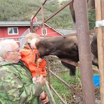 Kissing the moose