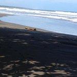 playa nigra