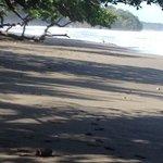 playa nigra e l'oceano