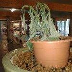 L'ingresso dell'area piscine: pianta secca.