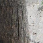 cable de luz suelto