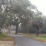 Lovely Live Oaks in the mists of the back.