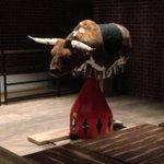 Pet bull to enjoy