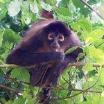 Spider monkey C.N.P.