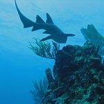 Underwater cousin