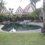Jacuzzi shared pool