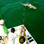 9ft tiger shark off Marco Island