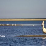 A friendly pelican in the lagoon at the front of the property