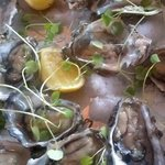 Coro Gold Oysters
