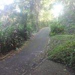 surrounding jungle and main road