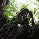 Los Haitises National Park, caves