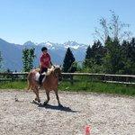 View of riding arena - beautiful haflinger horses!
