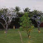 Xmas decorations in the garden
